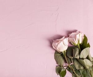 flores, rosas, and rosas rosadas image