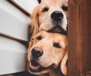 dog, animals, and cute image