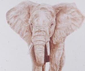 african elephant, welfare, and brown image
