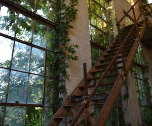 abandoned, plants, and stairs image