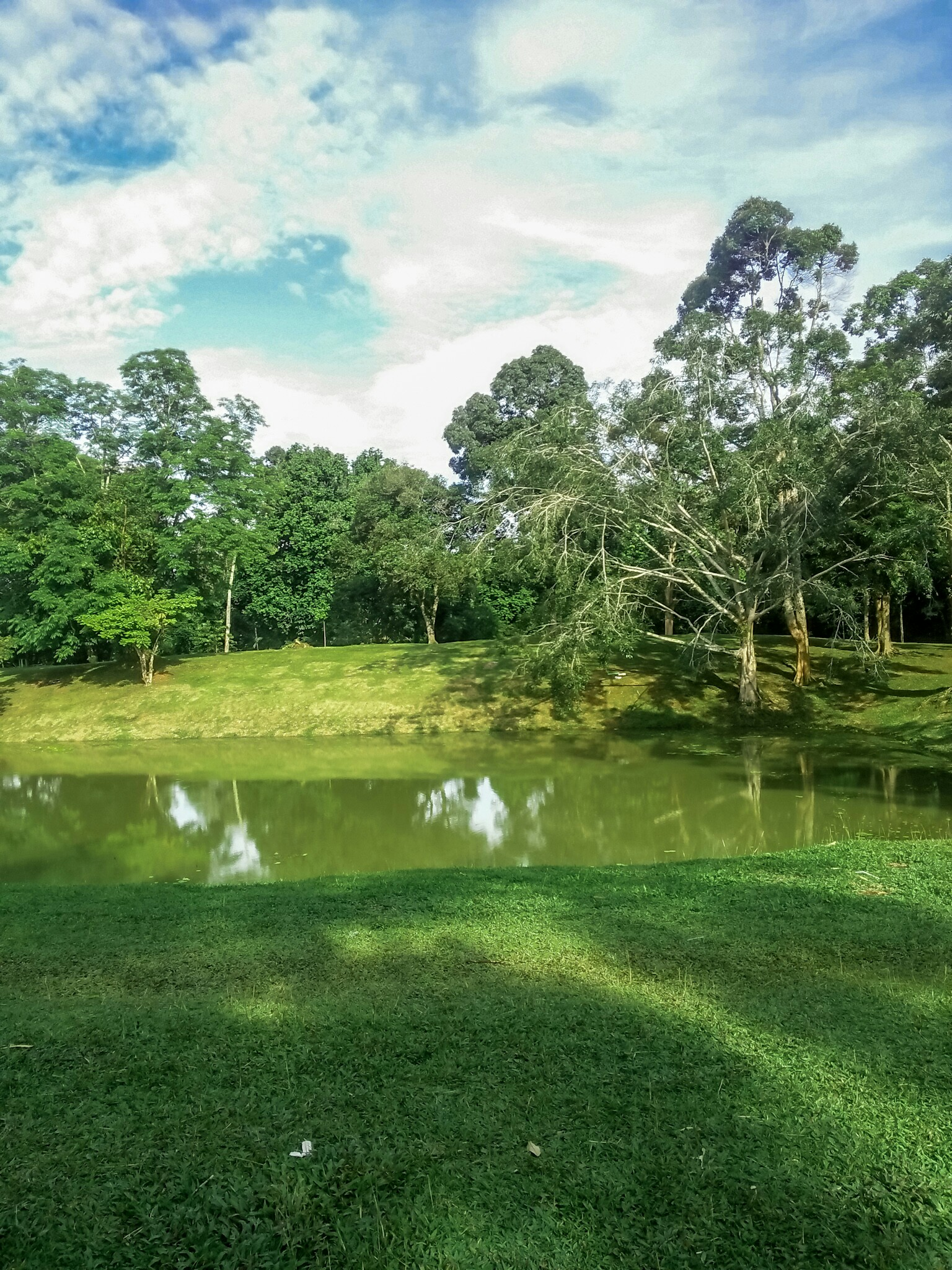 green, places, and pond image