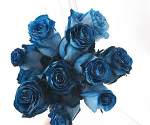 flowers, roses, and blue roses image