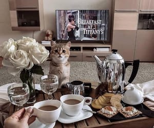 coffee, food, and cat image