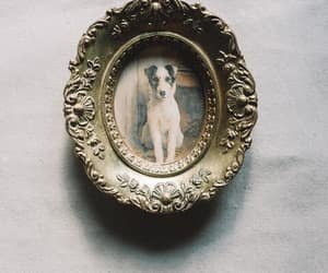 dog, photo, and photograph image