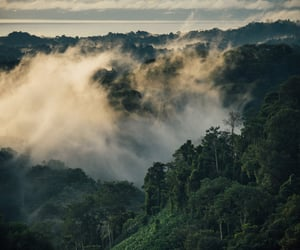 aesthetic, costa rica, and forest image