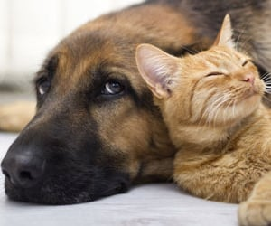 cat, dog, and friends image