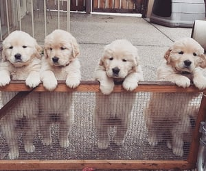 animal, cute, and puppy image