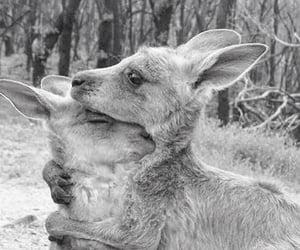 kangaroo, animal, and hug image