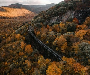 autumnal, beautiful, and colors image