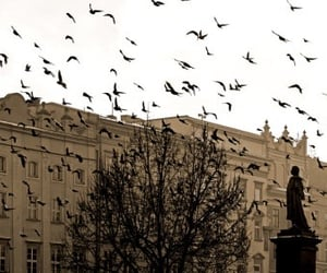 birds, flock, and photography image