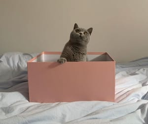 adorable, box, and cat image