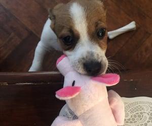 dog, jack, and pet image