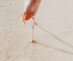 beach, flamingo, and sand image