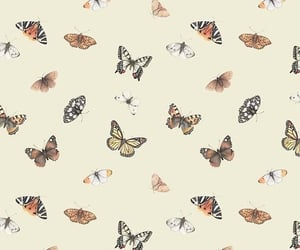 butterfly, aesthetic, and summer image