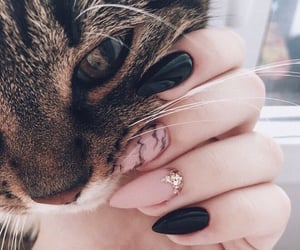 nails, cat, and animal image