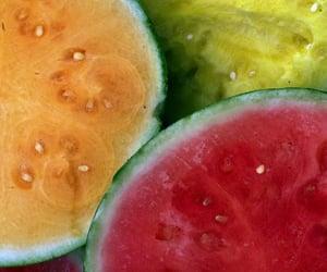 watermelon cucurbit fruit image