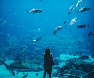 fish, blue, and aquarium image