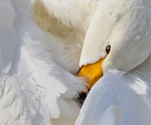 bird, graceful, and photography image