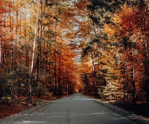 autumnal, fall, and forest image