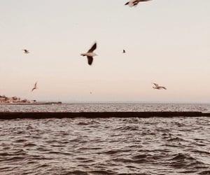 background, birds, and paradise image
