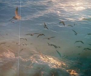 sea, vintage, and birds image