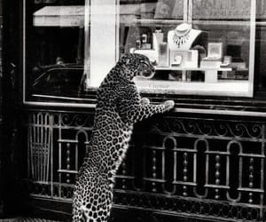 cartier, black and white, and leopard image