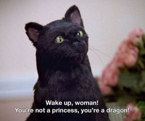 empowerment, quotes, and cat image