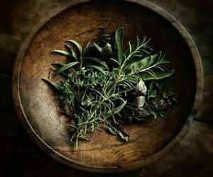 herbs, magic, and rosemary image