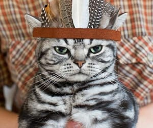 cat, chat, and funny animals image