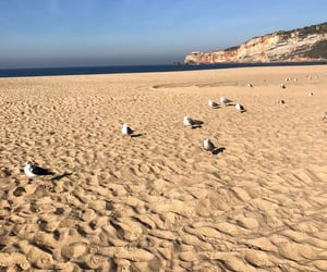beach, seagulls, and sand image