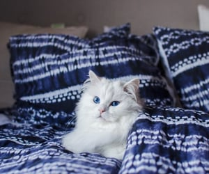 animal and bed image