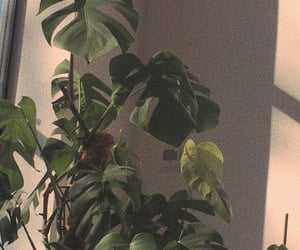 plants, wallpaper, and aesthetic image