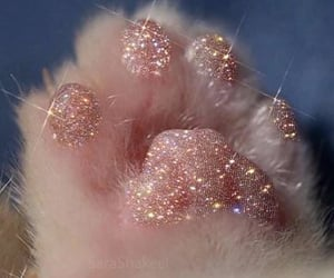 cat, glitter, and aesthetic image