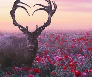 nature, adventure, and animal image