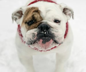 animals, pets, and snow image