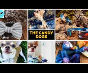 Dog Collar, video, and dog bow tie image