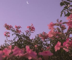 flowers, moon, and pink image