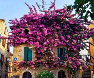 flowers, italy, and architecture image