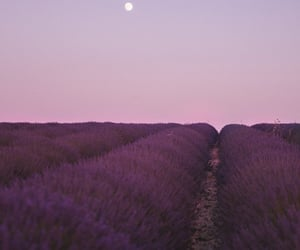 lavender, lilac, and moon image