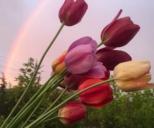 flowers, rainbow, and tulips image