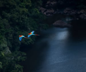 amazonia, america, and beautiful image