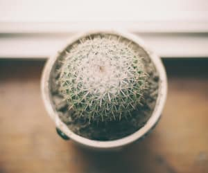 cactus, photography, and plant image