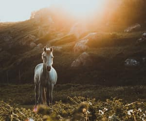 aesthetic, horse, and narnia image