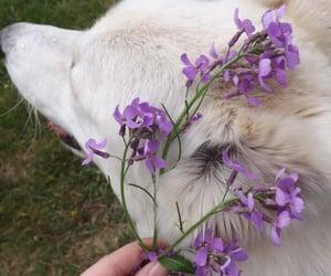 dog, flowers, and animal image