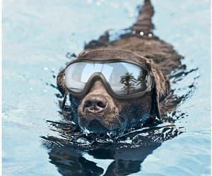 etsy, sunscreen, and dog goggles image