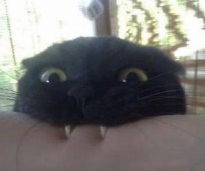 cat, animal, and bite image