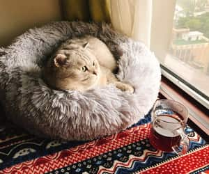 cat bed, etsy, and pet furniture image