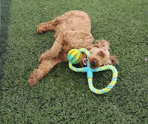 etsy, pet toys, and pet supplies image