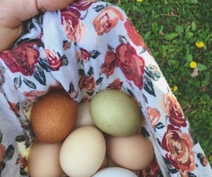 eggs, cottagecore, and nature image