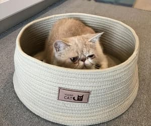 etsy, pet furniture, and pet nest image